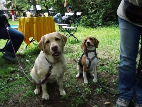 Luna und Fiby haben sich schon ausgemalt, wie schön die Pokale neben ihren Futternäpfen wohl aussehen mögen...