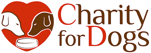 Charity for Dogs: Damit geht es allen Hunden gut!